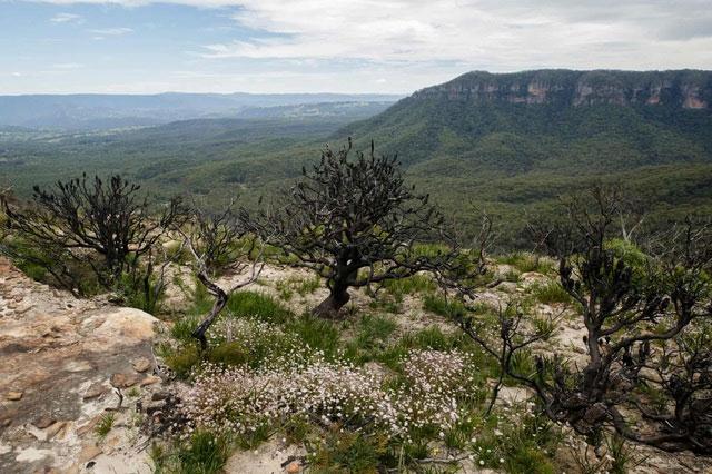 Hoa bích thảo còn được gọi là hoa sườn núi vì nó được tìm thấy trên các rặng núi.