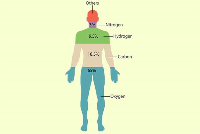 Oxy cũng là một thành phần của tất cả bốn hợp chất hữu cơ có trong cơ thể người.
