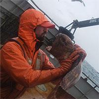 """""""Lươn quái vật khổng lồ"""" sa lưới ngư dân"""
