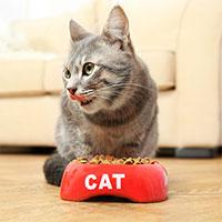 Vì sao mèo không chịu ăn khi bát đã lộ đáy dù vẫn còn thức ăn?