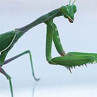 Có thể bạn chưa biết: Muỗi, chuột, côn trùng… cắn phá gần 27 tỉ USD mỗi năm