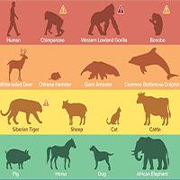 WHO xác nhận khả năng lây nhiễm virus SARS-CoV-2 từ người sang động vật