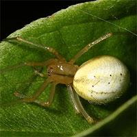 Cứ gặp nhện là đánh – Liệu chúng ta có nên giết những con nhện nhà hay không?