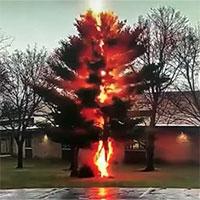 """Cận cảnh khoảnh khắc tia sét """"đốn hạ"""" cây lớn giữa sân trường"""