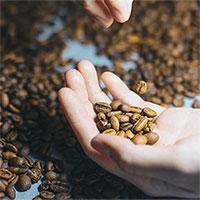 Trái đất nóng lên có thể khiến cà phê biến mất