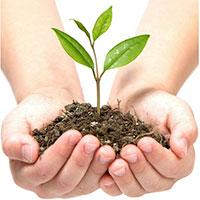 Tác dụng của cây xanh trong hệ sinh thái đô thị