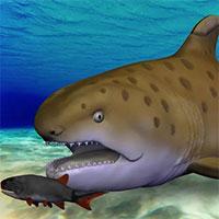 """""""Cá mập Godzilla"""" 300 triệu năm tuổi được xác định là loài mới"""