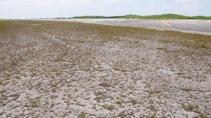 Khoảnh đất bao quanh sân bay là một vùng đầm lầy hoang dã.
