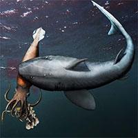 """Chờ """"thủy quái"""" mải mê săn mồi, cá mập lao ra đánh úp rồi làm thịt"""