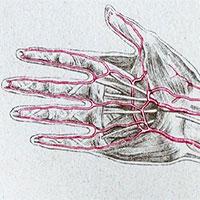 Loài người vẫn đang tiến hóa, cơ thể bạn có thêm một động mạch và nó đang phát triển rất nhanh