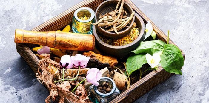 Trong lịch sử, phần lớn thuốc của con người đều bắt nguồn từ thực vật.