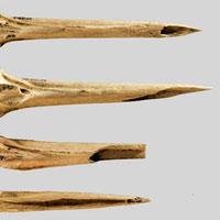 Xương gà tây mài nhọn dùng để xăm 5.500 năm trước