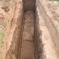 """Tìm thấy giống loài """"chưa từng được biết đến"""" trong lăng mộ bà nội Tần Thủy Hoàng"""