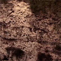 Video: Núi lửa kỳ lạ phun trào 3 triệu con dơi mỗi tối