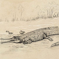 """Đào được """"trùm cá sấu"""" 5 triệu tuổi, to như xe buýt"""