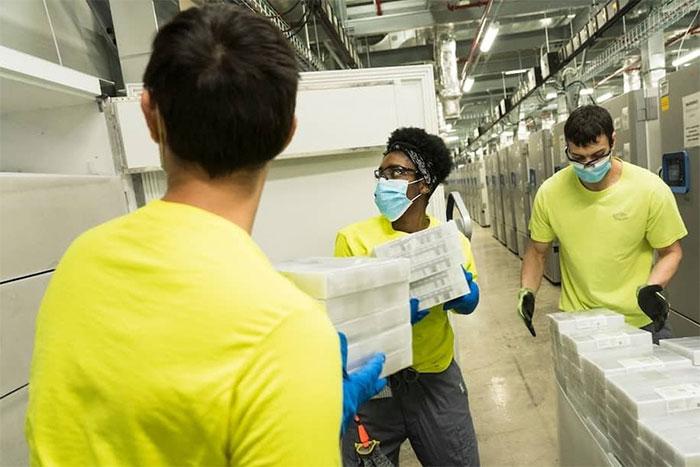 Nhân viên của Pfizer chuyển vaccine vào tủ trữ đông.