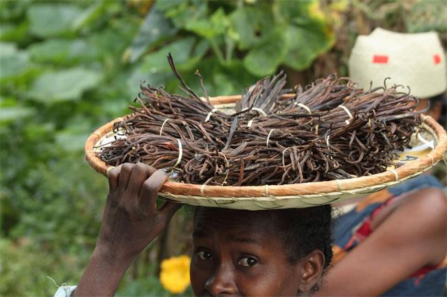 Vani là loại hương hiệu được sử dụng rất rộng rãi trong ngành công nghiệp thực phẩm
