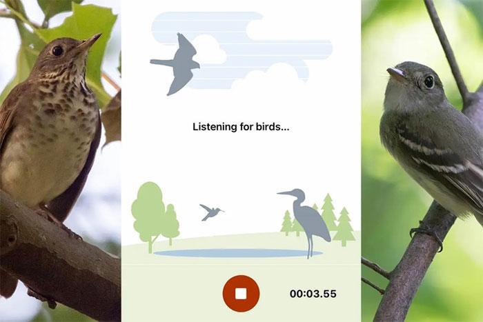 Ứng dụng nhận dạng giọng hót của chim