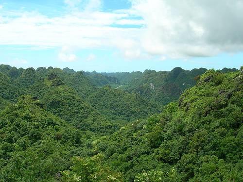 Giải pháp phục hồi rừng ở Vườn quốc gia Cát Bà
